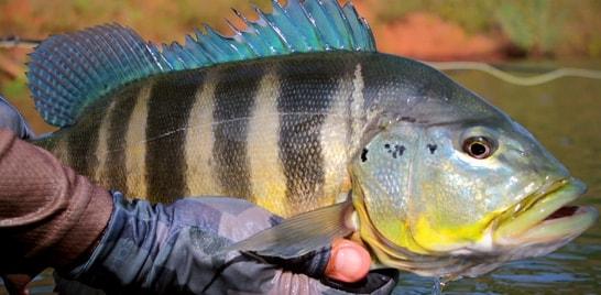 Novo acordo entre ministros traz reforço para a pesca esportiva