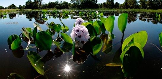 12 de novembro, dia do Pantanal