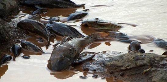 Acabou a vida no rio Doce