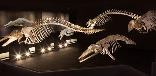 Museu Oceanográfico apresenta acervo