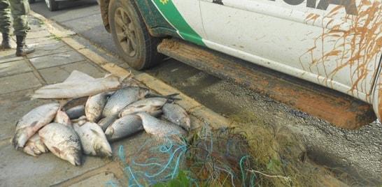 Pesca predatória no Paraná