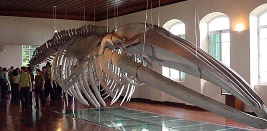 Férias no museu