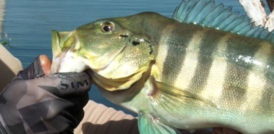 Vem aí o 3º Torneio Internacional de Pesca ao Tucunaré - PESTI