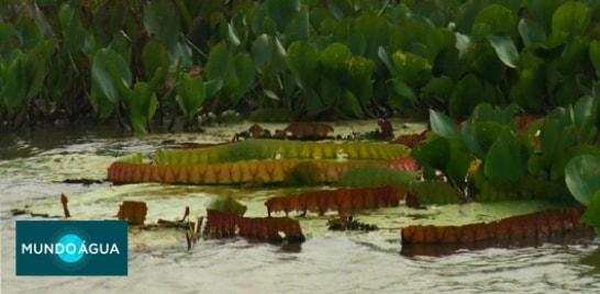 MUNDO ÁGUA - RIO PARAGUAI