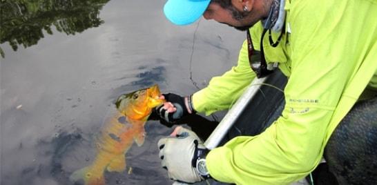 Dica de Pesca: aprenda a manusear o peixe corretamente