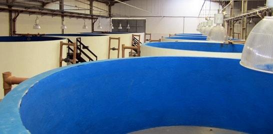Laboratório Nacional de Aquicultura Marinha tem gestão compartilhada