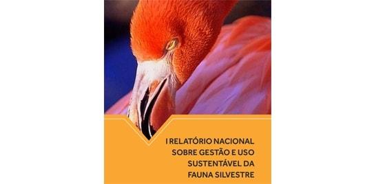 Primeiro relatório sobre gestão da fauna tem artigo sobre pesca esportiva