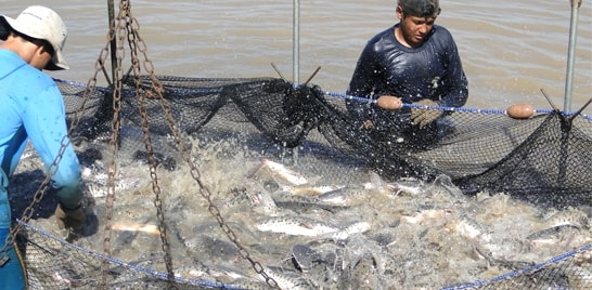 Sustentabilidade é opção para crescimento da produção de pescado