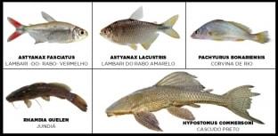 Pesquisa revela grande diversidade de peixes de água doce no Rio Grande do Sul