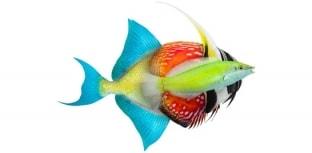 Grupo Onda está de volta no Aquarismo