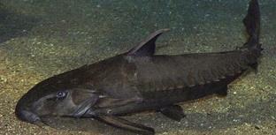Pesquisa destaca peixes que podem machucar pescadores