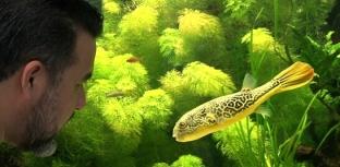 Aquarismo entra na sua quarta temporada