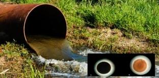 Bactérias ajudam no tratamento de água das refinarias de petróleo