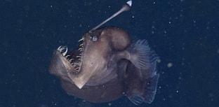 Pela primeira vez cientistas captam imagens  do diabo negro do mar