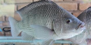 Empresas de comercialização de pescado se unem