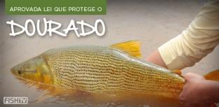 Boa notícia para o pesque e solte: Aprovada lei que protege o dourado em Aquidauana