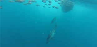 Proteção para 475 espécies aquáticas