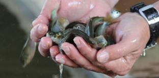 Principais feiras de pescados do mundo estão com inscrições abertas