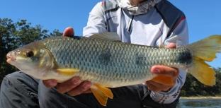 13º Torneio de pesca à piapara em Minas Gerais