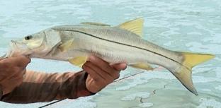 1º Festival de Pesca Esportiva
