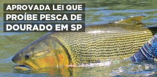 Aprovado na Assembleia, projeto que proíbe a pesca de dourado no Estado de São Paulo