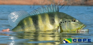 Foco no esporte: vem aí a Confederação Brasileira de Pesca Esportiva