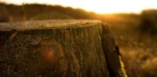 Países da América Latina e Caribe se comprometem em restaurar áreas degradadas