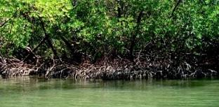 Brasil tem maior área de manguezais protegida do mundo
