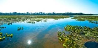 2 de fevereiro é o Dia Mundial das Áreas Úmidas