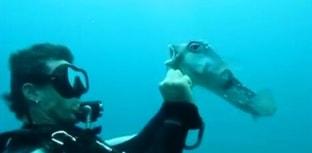 Mergulhador retira anzol preso em baiacu