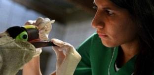 Tucano receberá prótese de bico impressa em 3D