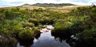Áreas protegidas geram mais de 600 bilhões de dólares