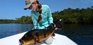 Rio Marié: lar dos tucunarés-açus