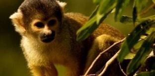 Mudanças climáticas podem provocar a extinção de 16% das espécies