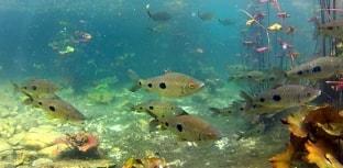 22 de maio é o Dia Internacional da Biodiversidade