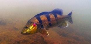 Novidade: Zagaia Lures começa a criar conteúdo sobre pesca