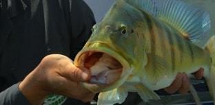 Reunião do Compesca foi marcada por ações de fomento à pesca esportiva