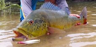 Além de grandes peixes, lojas também fazem parte da programação da Fish TV