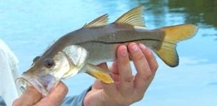 Setembro tem torneio de pesca em Cananéia