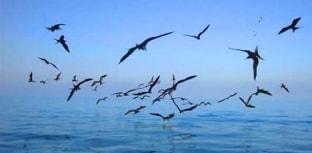 Dias contados para captura acidental de aves marinhas