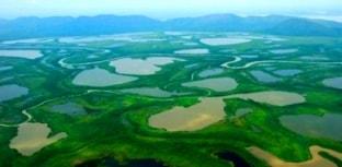 12 de novembro Dia do Pantanal