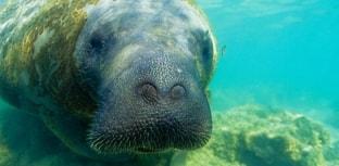 SOS Mata Atlântica comemora 30 anos
