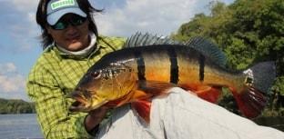Associação de Barcelos faz petição pela proibição da pesca predatória do tucunaré-açu