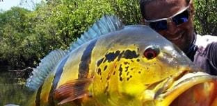 Pura Pesca na Fish TV
