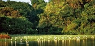 WWF-Brasil e Coalizão Pró-UCs discutem formas de valorizar áreas protegidas