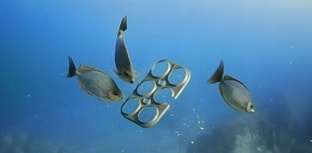 Embalagens comestíveis para animais marinhos