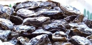 Extração, consumo e comércio de moluscos estão suspensos em Santa Catarina