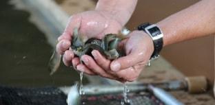Vagas para bolsas na Embrapa Pesca e Aquicultura estão abertas