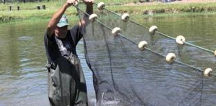 Eventos na área da piscicultura acontecem em julho