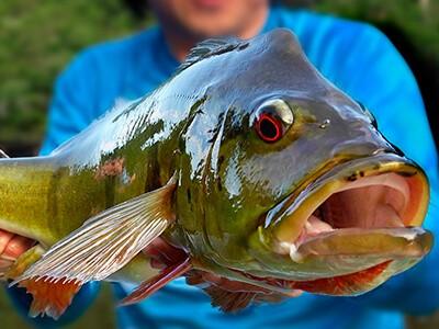 Federações de pesca esportiva de diferentes estados se manifestam